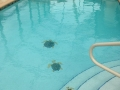 Custom Pool Designs 7